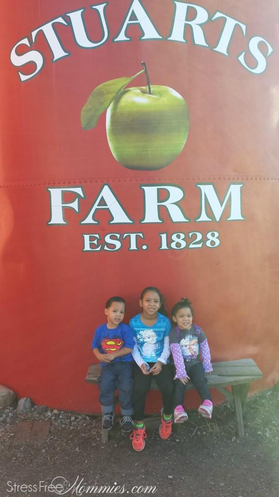 apple picking at Stuart's farm
